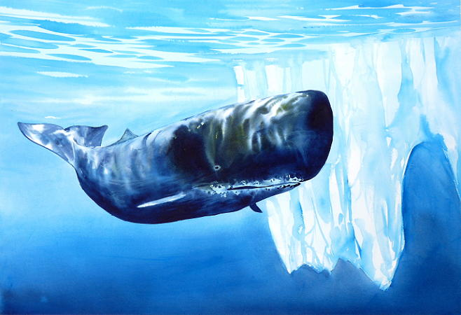 Sperm Whale and iceberg